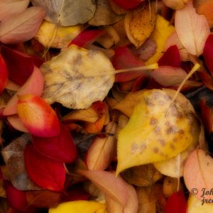 A Pillow of Fallen Leaves