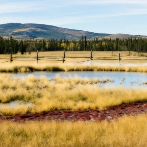 Takhini Salt Flats Gold