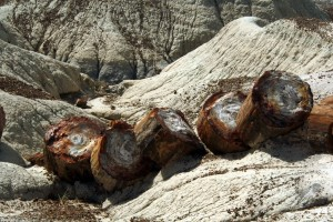 Petrified Forest - Arizona © Liz Reichenbach