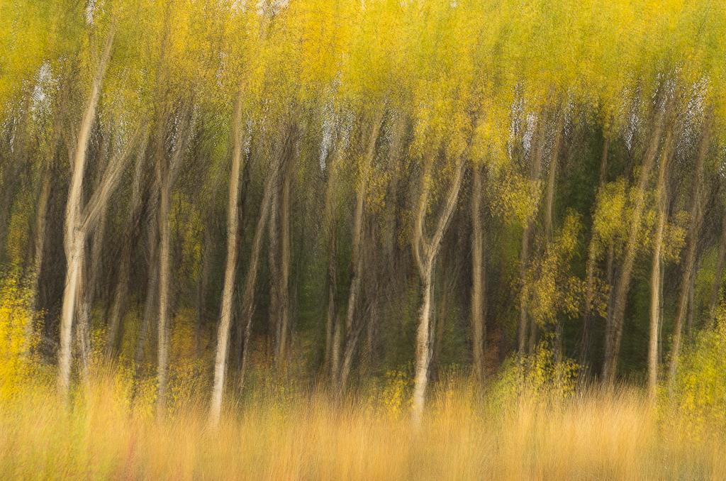 © John Reeve