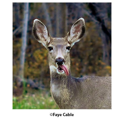 """""""Deer Close Up"""" by Faye Cable"""