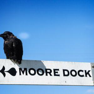 Just follow the beak