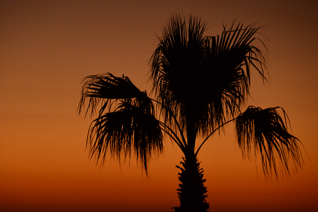 Sylke Baranski - Palmtree