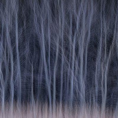 John Reeve - Winter Woods Waltz  22/27 points - Honourable Mention